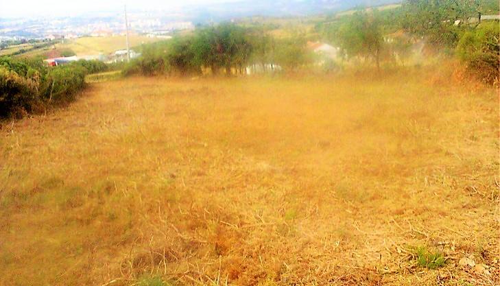 Terrenos T0 - Loures, Santo Antão do Tojal